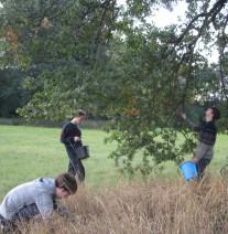 Freiwillige sammeln Eicheln als Saatgut  © Birgit Krummhaar
