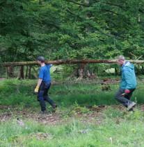 Zwei junge Männer tragen einen Fichtenstamm im Wald