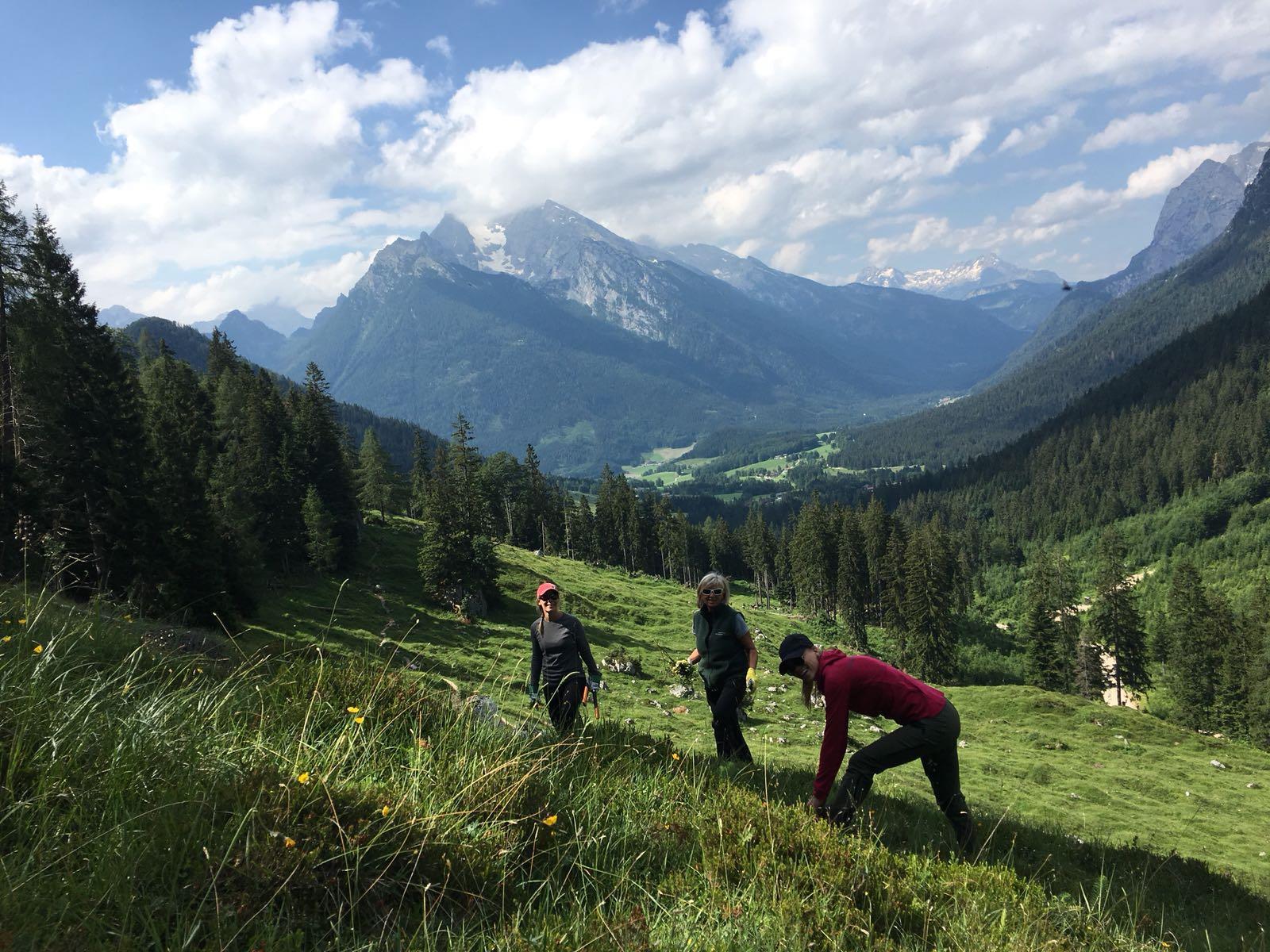 Freiwillige der Peak Performance Produktion AB arbeiten auf einer Wiese. Im Hintergrund sieht man die Berge.